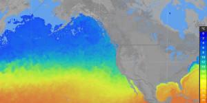 Marine Weather Sample Windalert Sea Surface Temperature Output