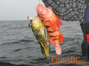 Rockfish ID 2
