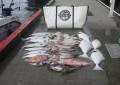 Fish Cooler Bag Review