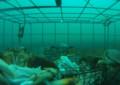 Crab Fishing Underwater GoPro Videos