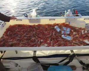 Best Prawn Bait and Shrimp Bait